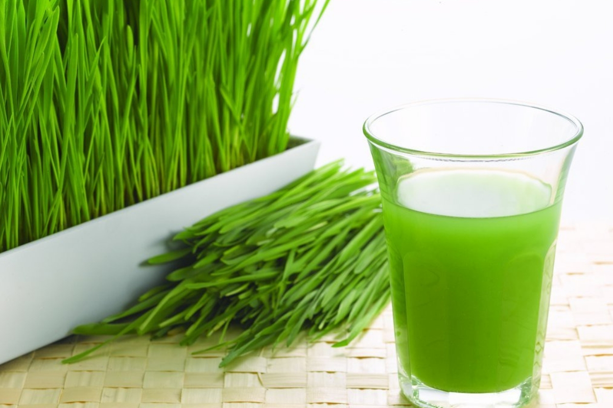 Wheatgrass: Nature's Medicine